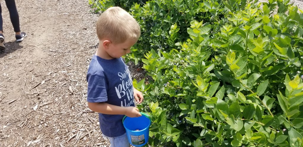 picture of young blueberry picker at Temecula Berry Co. in Temecula, CA