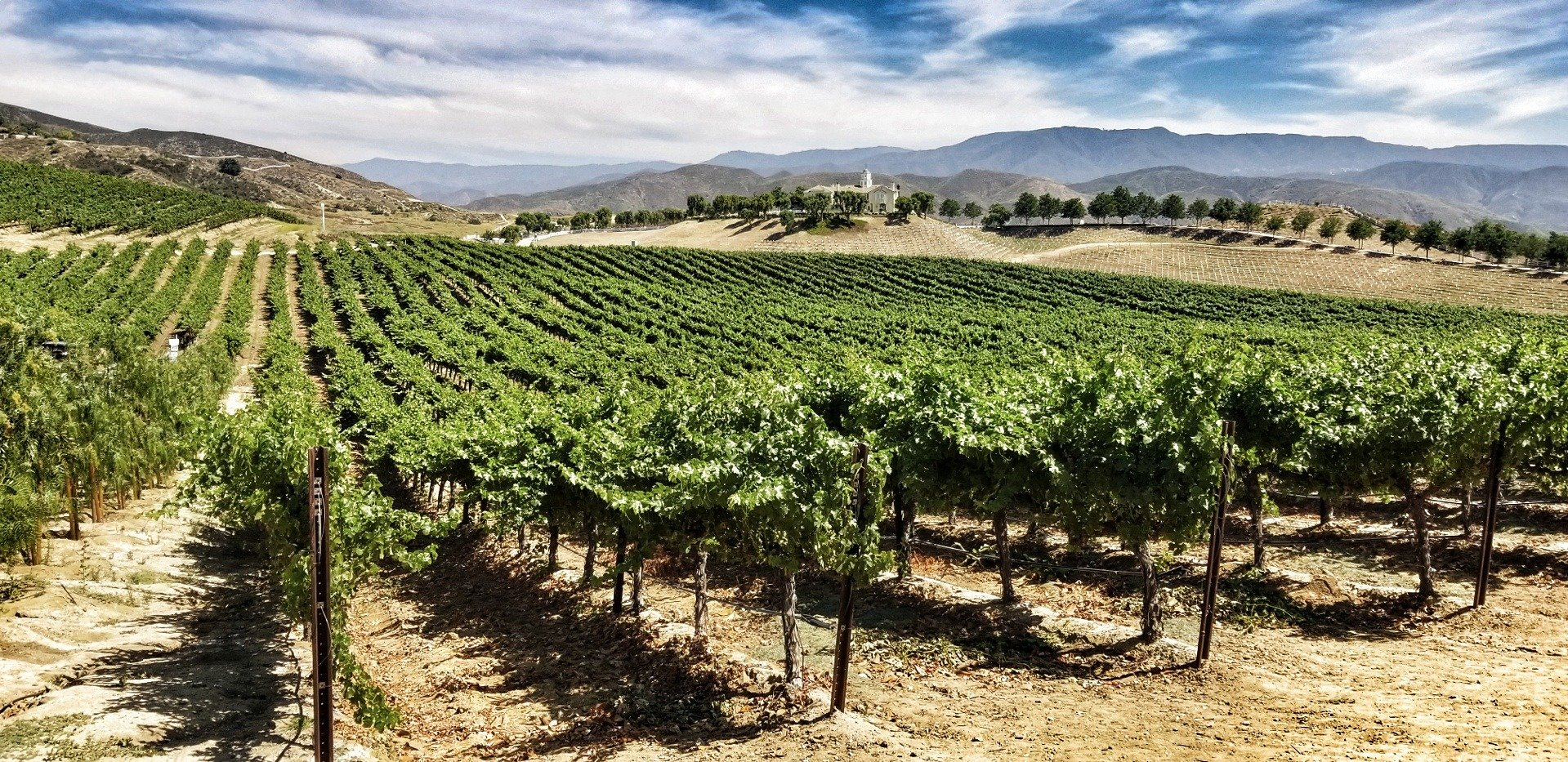 picture of vineyard at leoness cellars in temecula, ca