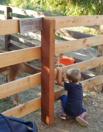 Longshadow Ranch Winery
