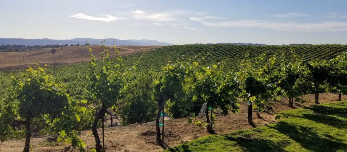 Callaway vineyard and winery